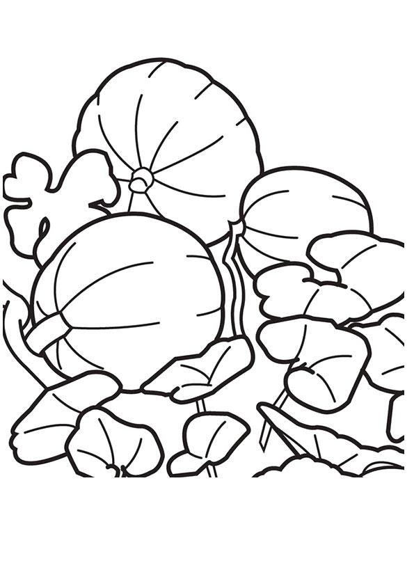 pumpkin-leaf