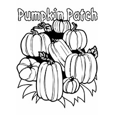 pumpkin-patch-toll