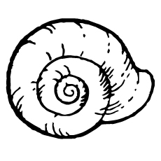rounded-shell