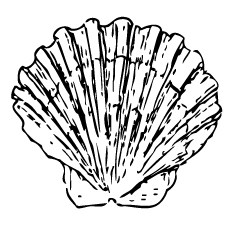 shell-front-side