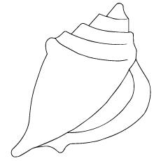 single-shell