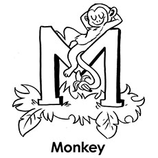 The M For Monkey