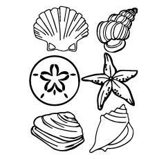 types-of-sea-shell