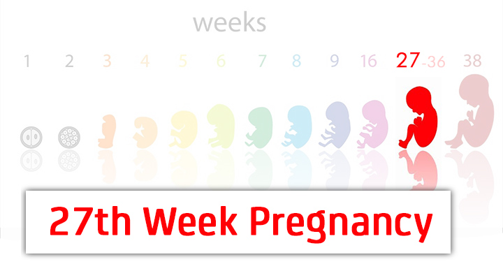 27th week pregnancy