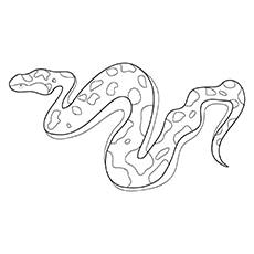 A-Snake-Coloring-boa-16