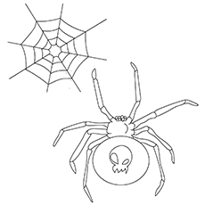A Spider With Skul