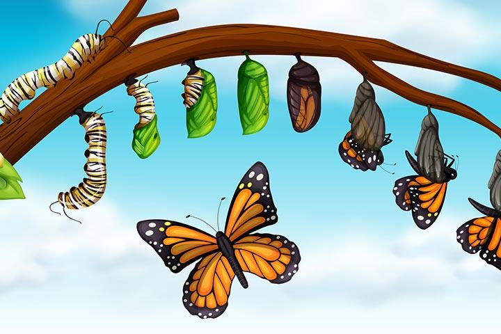 A butterfly's struggle