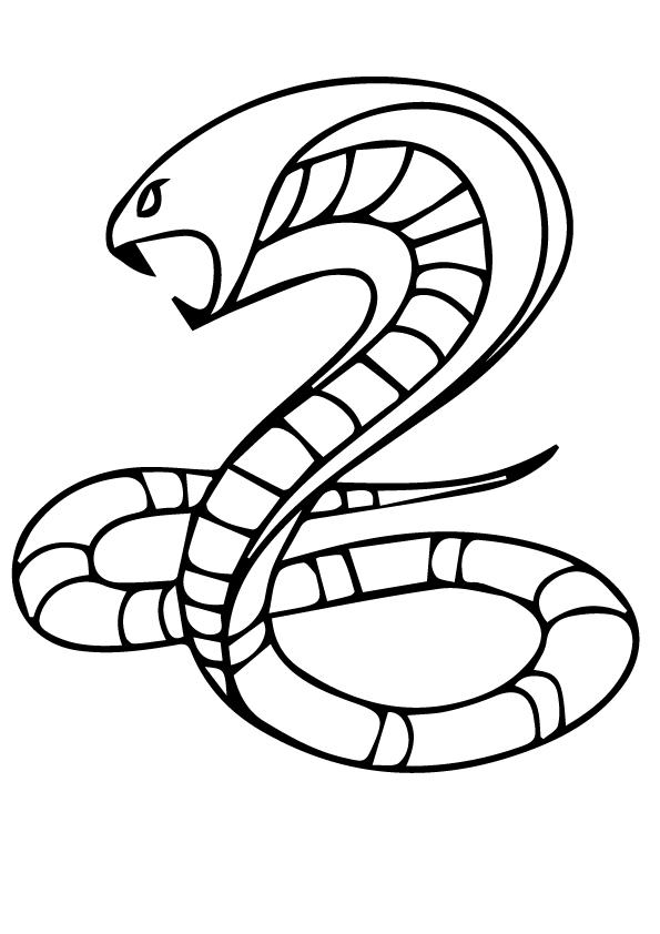 A-kobra-snake