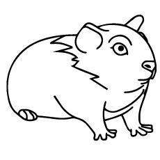 A sweety-Guinea-Pig
