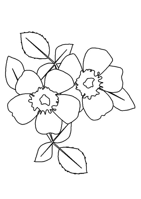A-wild-prairie-rose