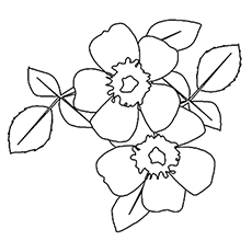 Wild Prairie Rose Picture to Color