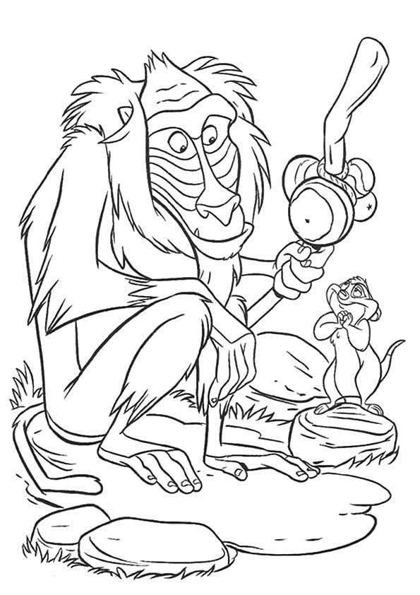Baboons-monkey