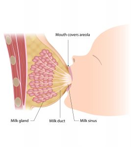 Breast-Milk-Produced