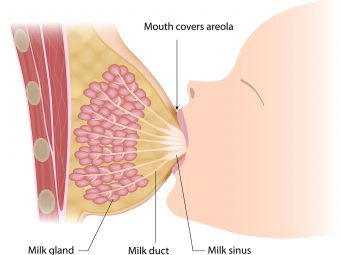 How Is Breast Milk Produced?
