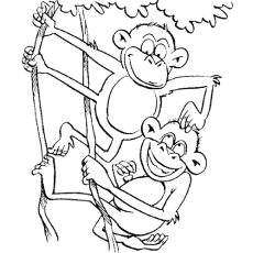Funny-Monkeys-Branch