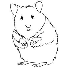 Hamster 17