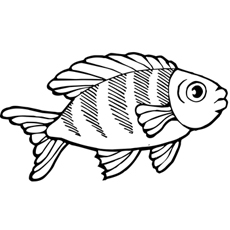 koi fish large eyes - Koi Fish Coloring Pages