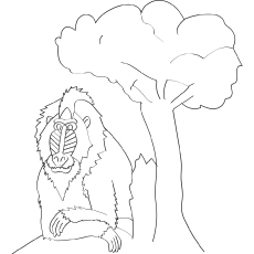 Mandrills monkeys coloring pages