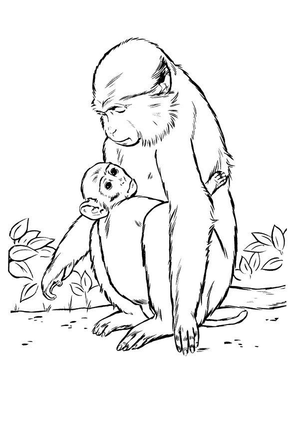 Monkey-Her-Baby