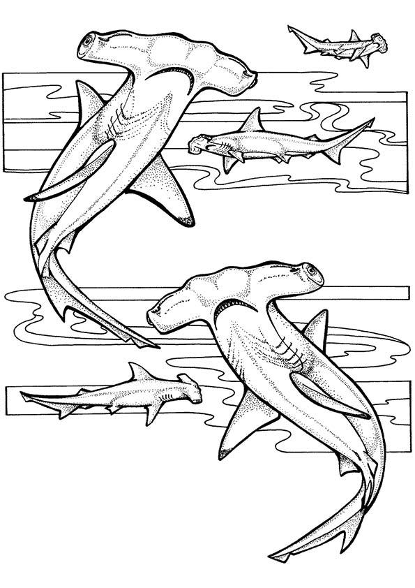 Ocean-sea-life-aquarium