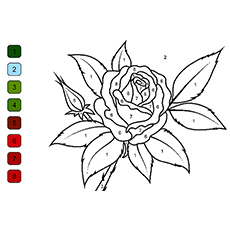 Rose Color By Number Picture