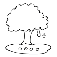 An Apple Falling From The Tree Coloring Picture