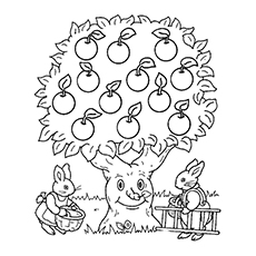 Bunnies Picking the Apples Pictures to Color Free