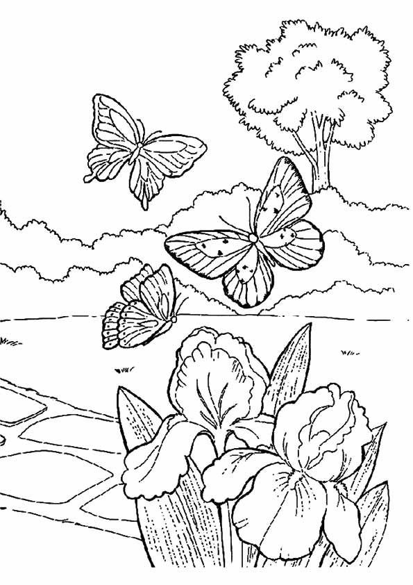 The-Butterflys
