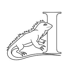 The Cartoon Iguana