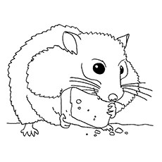 top 25 free printable hamster coloring pages