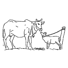 The-Mother-Cow-Kissing-Calf
