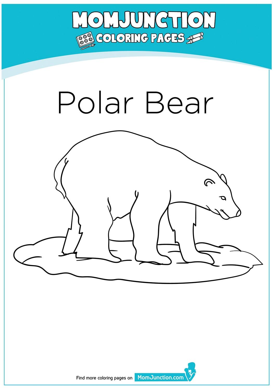 The-Polar-Bear-17