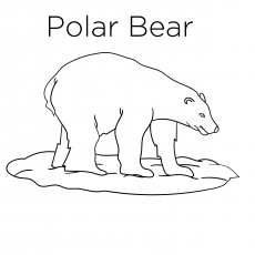 The-Polar-Bear-17
