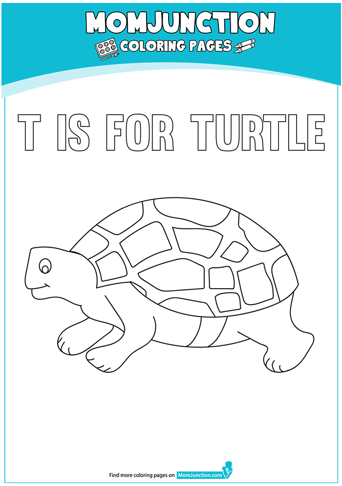 The-T-For-Turtle-16