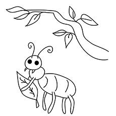 The-ant-with-leaf-16