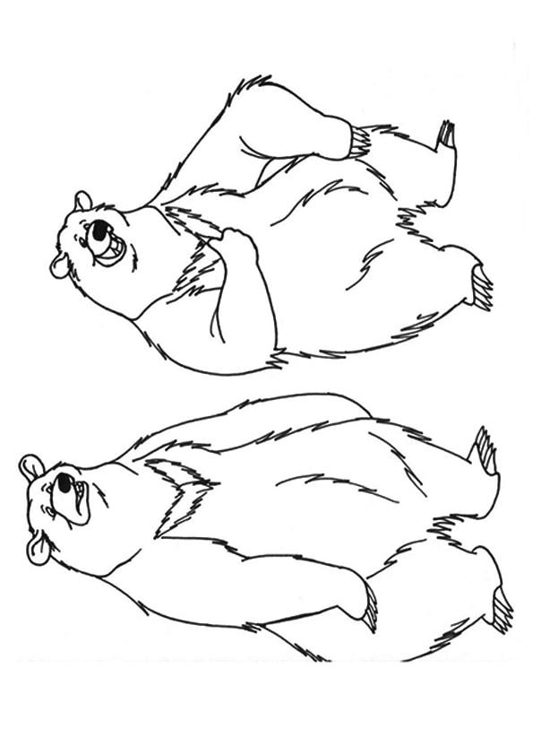The-bears-playing