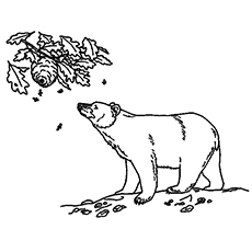 The-brown-bear-sniffing-honey