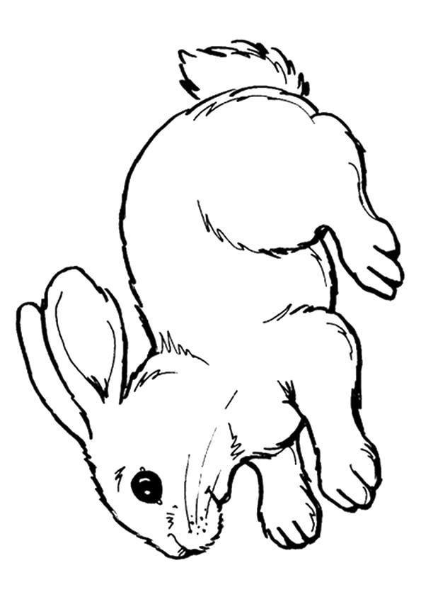 The-cute-rabbit