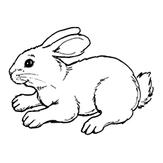 printable coloring page of cute rabbit - Bunny Coloring Sheet
