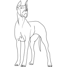 The-great-dane