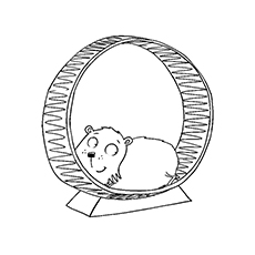 The-hamster-on-a-hamster-wheel