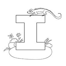 The-i-for-iguana-16