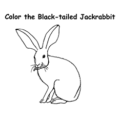 Jackrabbit Coloring Sheet