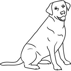 The-labrador
