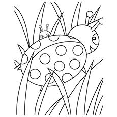 Lady Bugs Printable