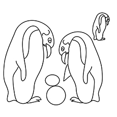 The-penguin-playing-ball-16