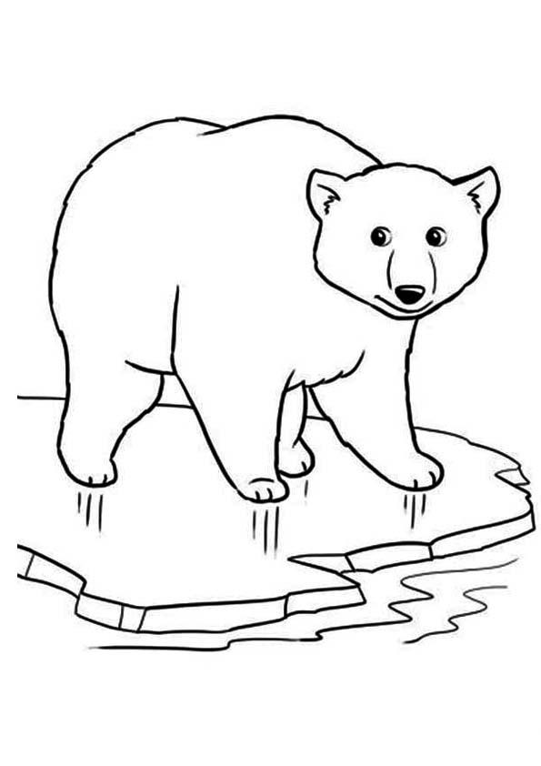 The-polar-bear-on-ice