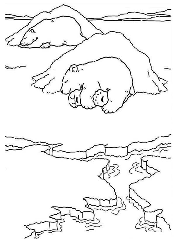 The-polar-bear-sleeping