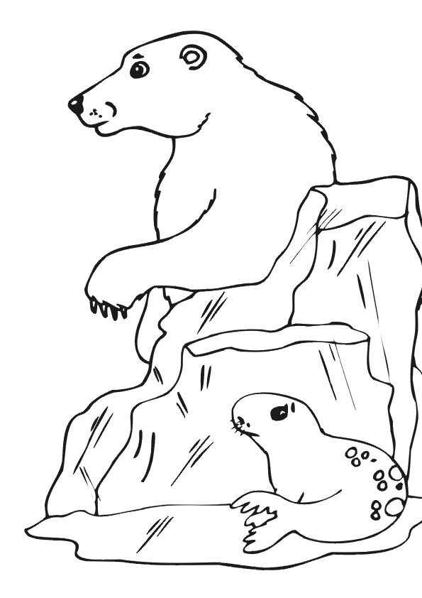The-polar-bear-with-seal