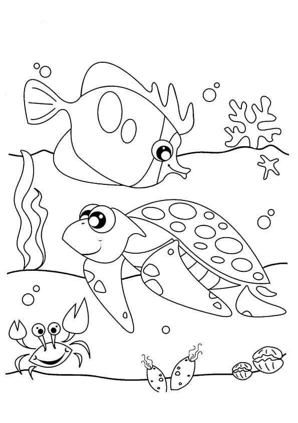 The-sea-life